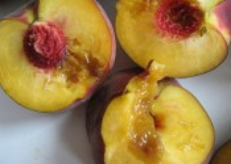 В Смоленской области обнаружены зараженные персики