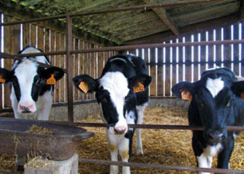 В Смоленской области поддержат семейные фермы