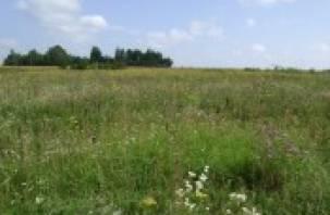 Собственника заставили обрабатывать пустующие земли в Гагаринском районе