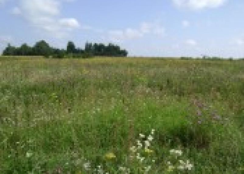 В Смоленской области пресекают нецелевое использование земли