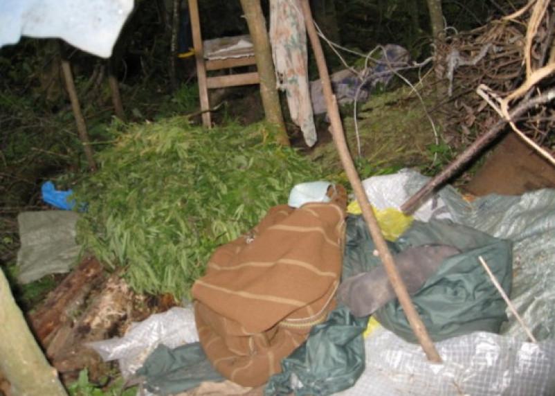 В Смоленской области задержан белорус, хранивший марихуану