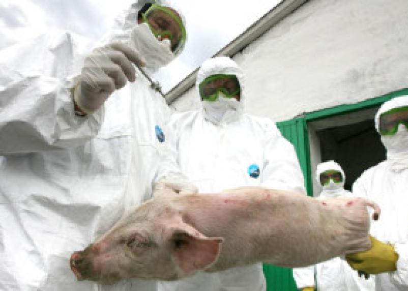 Смоленская свинина не прошла через кордон