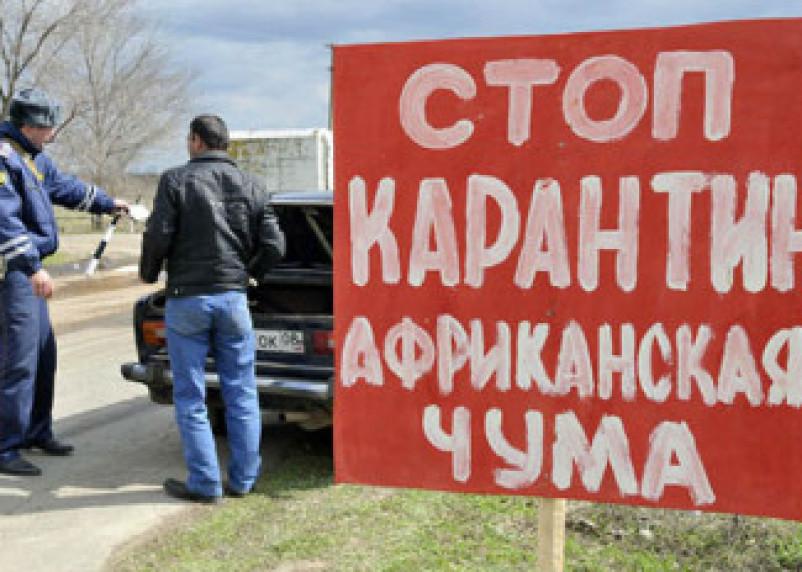 В Смоленской области зафиксирована очередная вспышка чумы свиней
