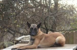 В Смоленске собака помогла вычислить злоумышленника