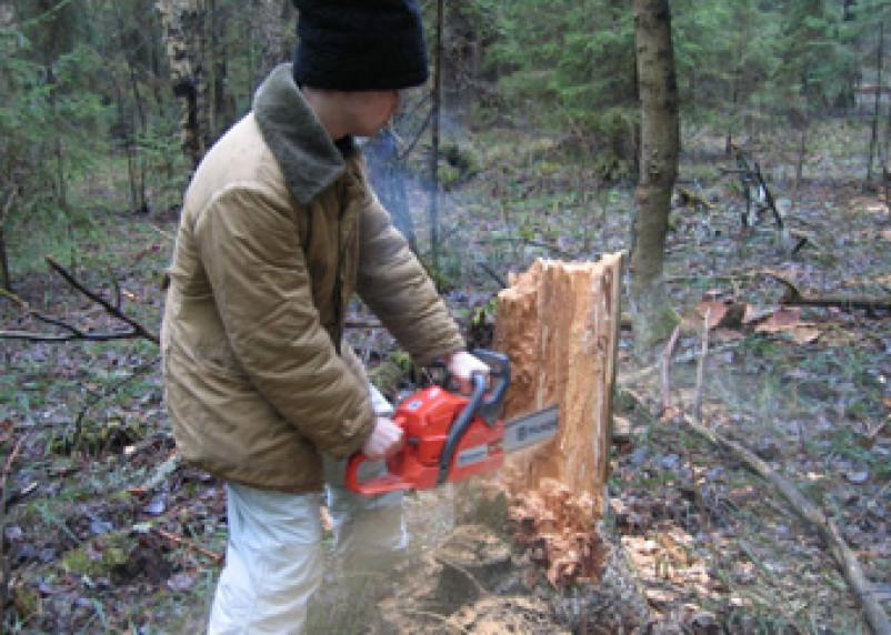 В Рославльском районе задержаны незаконные рубщики леса