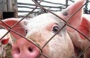 В Смоленской области зарегистрирован 21 случай африканской чумы свиней