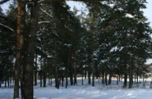 Заблудившиеся в лесу в Демидовском районе брат с сестрой вернулись домой