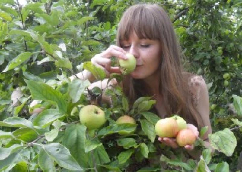 Одно яблоко в день может спасти от инфаркта
