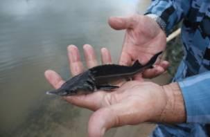 Национальный парк «Смоленское Поозерье»: отсчет нарушений-2013