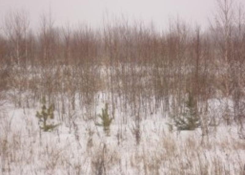 ООО «Грань» нарушило земельное законодательство