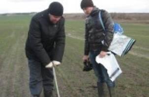 В Смоленской области выявляют контрафактные семена