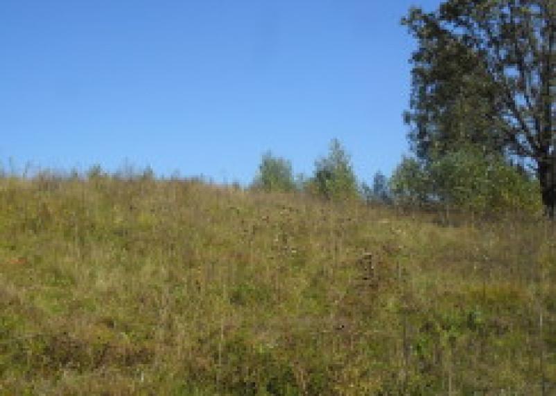 Ельнинские сельскохозяйственные земли зарастают сорной травой