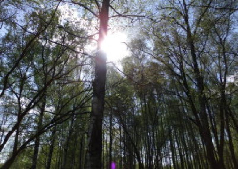 В Шумячском районе выявлена незаконная порубка деревьев