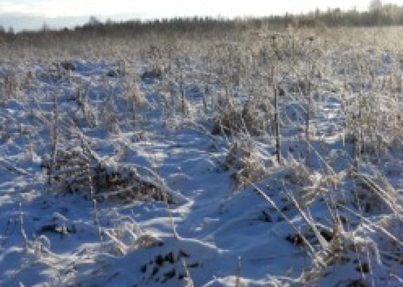 Кооператив «Пискарихинский» и колхоз «Новосельский» нарушили земельное законодательство