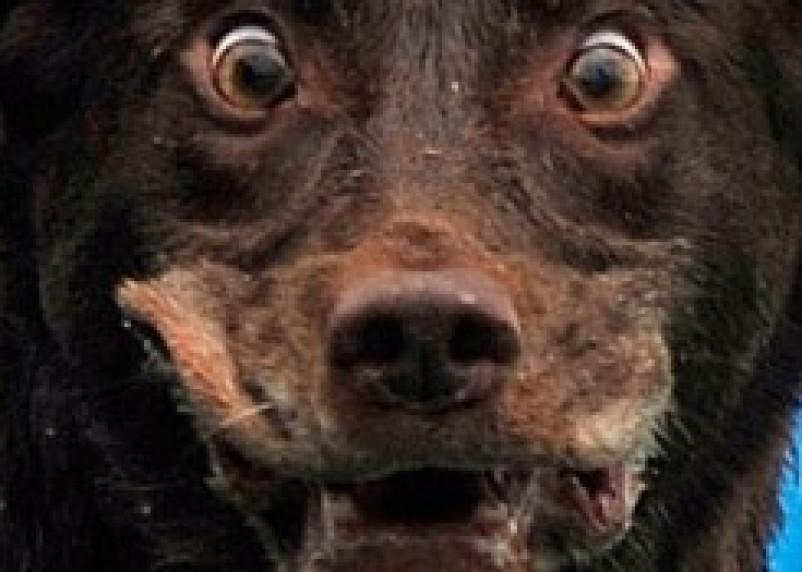 В Рославле три домашних собаки заболели бешенством