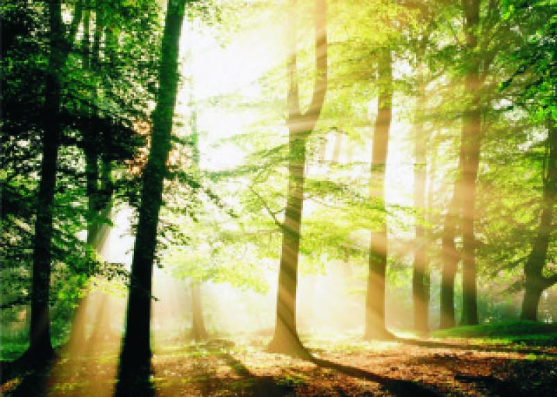 Лес – наше богатство. Насколько полно его используют на Смоленщине?