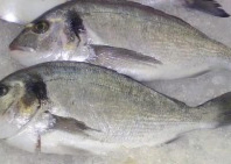 16 тонн мороженой рыбы возвращено в Турцию