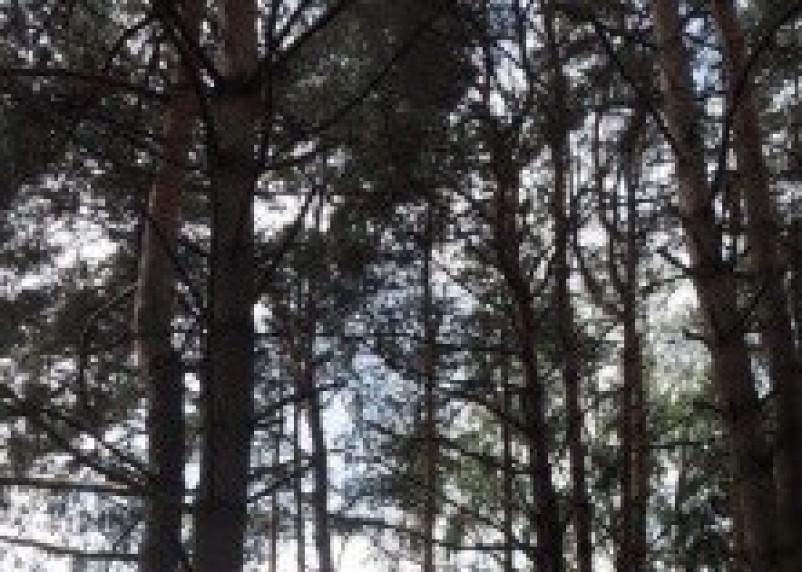 В Глинковском и Холм-Жирковском районах незаконно вырубали лес