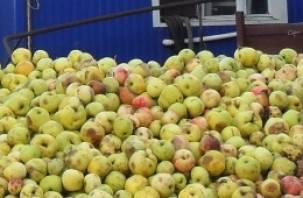 Смоленск не захотел новозеландских яблок
