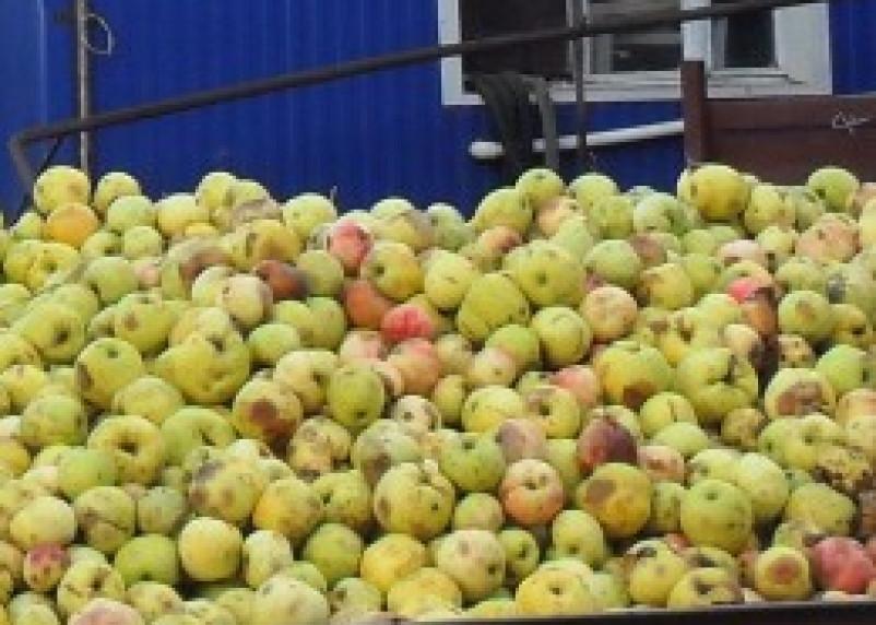 В Польшу возвращено более 11 тонн яблок