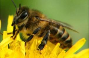 Вяземским пчеловодом недовольны соседи