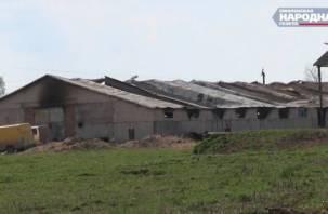 Сгоревший конно-спортивный клуб в деревне Чекулино просит о помощи