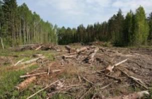 В Шумячском районе неизвестные вырубили 31 ель