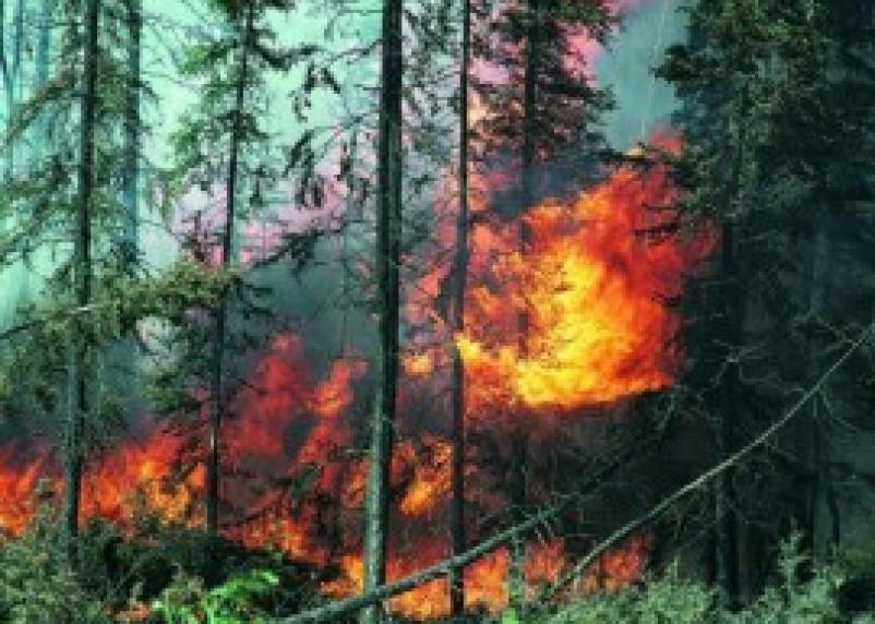 «Лесной дозор» будет помогать обнаруживать пожары на Смоленщине