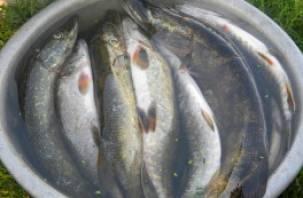 Десногорские браконьеры наловили рыбы на 97 килограммов