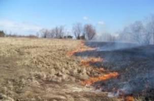 Жители Смоленской области самостоятельно борются с палом сухой травы