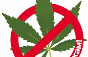 Полиция Велижского района нашла марихуану у граждан Узбекистана