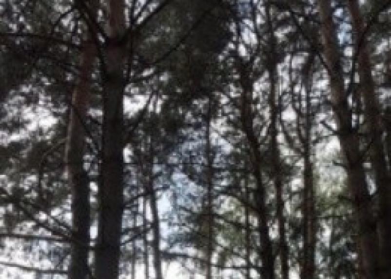 60 миллионов рублей на лесоустройство Смоленщины
