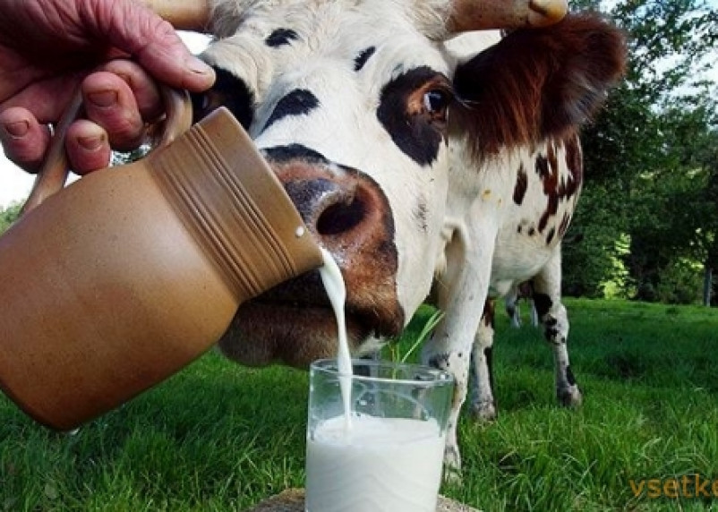 На Смоленщине снижается производство молока