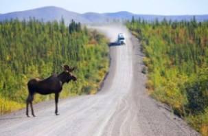 На дорогах Смоленщины появятся переходы для диких животных?