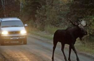 На дорогах Смоленщины в ДТП пострадали 7 человек и… 1 лось