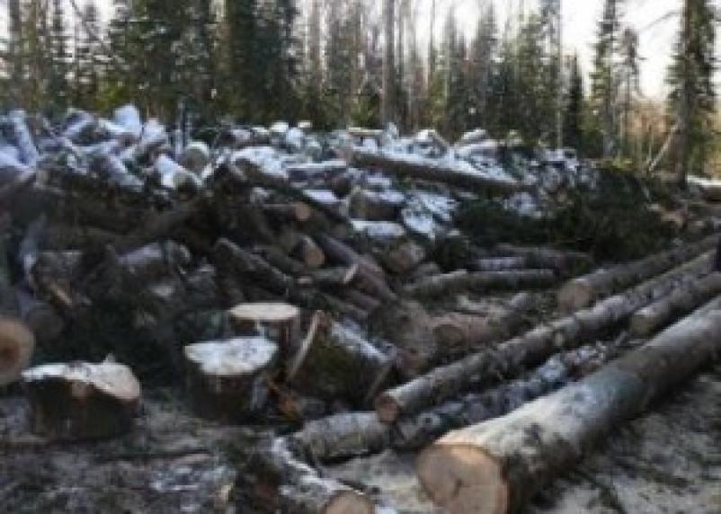 70 случаев незаконной рубки леса выявлено в Смоленской области за пять месяцев нынешнего года