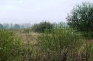В Вяземском районе заросло 98 гектаров сельхозземель