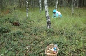 В Холм-Жирковском районе ищут пропавшую в лесу женщину