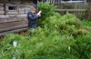 В Ярцевском районе на огороде у пенсионерки полиция обнаружила плантацию конопли