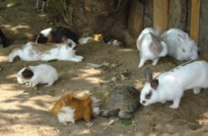 Смоленский зоопарк готовит сюрпризы ко Дню эколога