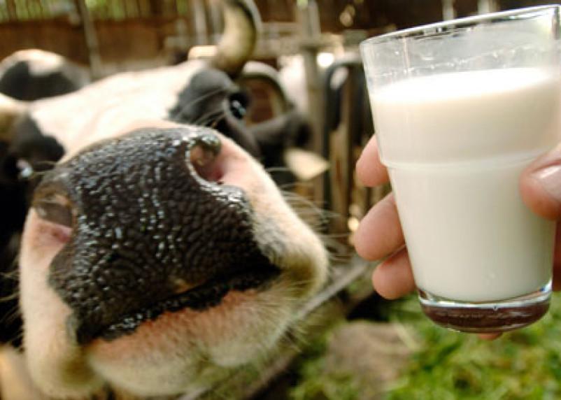 Смолянам предложили самим решить «молочную проблему» области