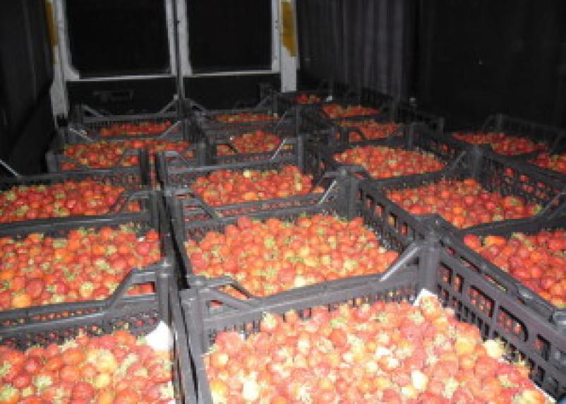 На Смоленщину не допустили пять тонн белорусской клубники и огурцов