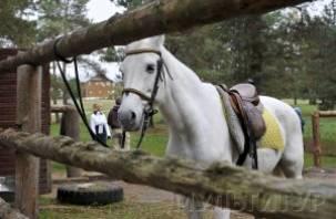 Новая конно-спортивная база в Одинцово откроется в августе