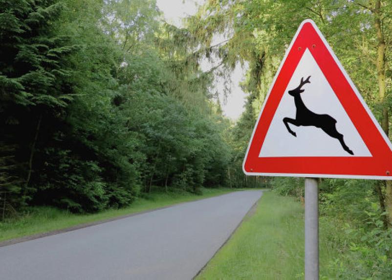 На Смоленщине участились ДТП с дикими животными