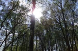Пропавший в Смоленском районе пенсионер найден мертвым в лесу