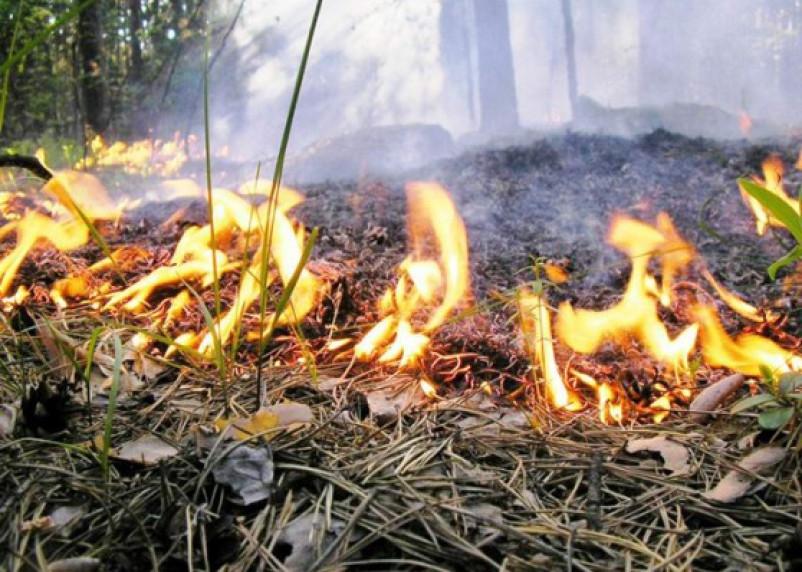 Гагаринский и Вяземский районы объявлены зоной пожарной опасности