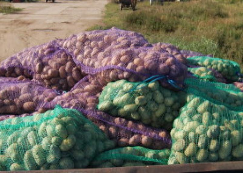 Десногорские заключенные собрали 30 тонн картофеля и 50 тонн пшеницы