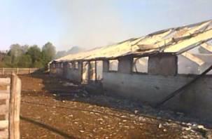 При пожаре на ферме в Починковском районе погибло 35 овец