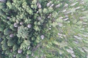 Смоленским лесам помогают беспилотники