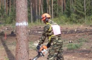 На Смоленщине прошли соревнования лесорубов